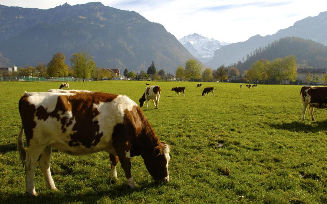 L'UDI tient à réaffirmer son entier soutien au monde agricole et à l'agriculture française